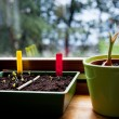 Stock Photo: Sowing seeds indoor