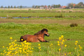 Horse in meadows — Stock Photo