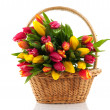 Basket filled with tulips — Stock Photo