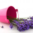 Bouquet Lavender in bucket — Foto de Stock