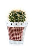Cactus — Photo