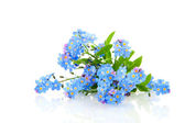 Forget me not — Stock Photo