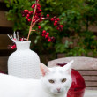 Royalty-Free Stock Photo: White cat in the garden