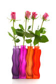 Row with colorful roses — Stock Photo