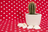 Cactus on red — Foto Stock