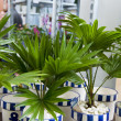Tropical plants — Stock Photo