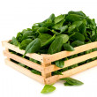 Crate with spinach — ストック写真