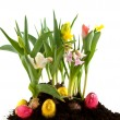 Stock Photo: easter flowers