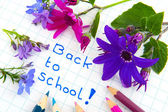 Back to school with flowers — Stock Photo