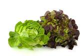 Lettuce assortment — Stock Photo