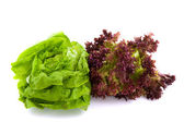 Lollo Rosso and butterhead salad — Stock Photo