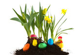 Easter eggs in the garden — Stock Photo