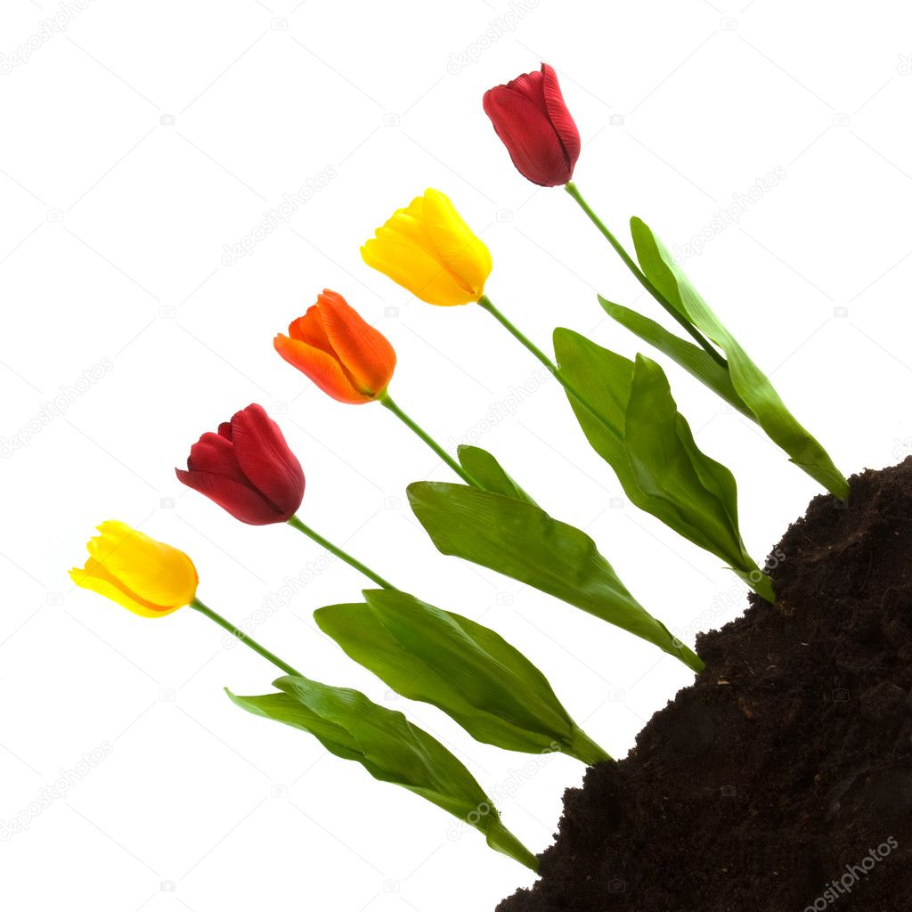 Gardening with a modern arrangement of tulips — Stock Photo #2939802