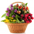 Basket tulips - Stock Photo