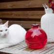 White cat in the garden - Stock Photo