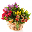 Basket tulips — Stock Photo