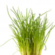 Stock Photo: Fresh chives