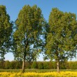 Trees in landscape — Stock fotografie