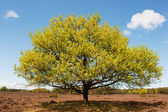 Buk drzewo krajobraz — Zdjęcie stockowe