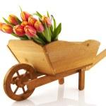 Wooden wheelbarrow with flowers — Stock Photo
