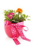 Garden flowers — Stock Photo