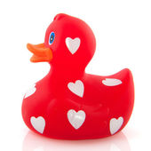 Love duck — Stock Photo