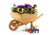 Tahta tekerlek barrow keman çiçekler — Stok fotoğraf