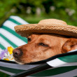 Royalty-Free Stock Photo: Dog on vacation