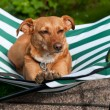 Resting dog — Stock Photo