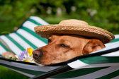 Dog on vacation — Stock Photo