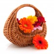 Stock Photo: Little wicket basket flowers