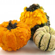 Squashes and pumpkins — Stockfoto