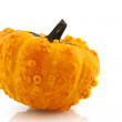 Squashes and pumpkins — Stock Photo