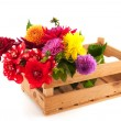 Crate colorful Dahlias — Stock Photo