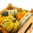 Squashes and pumpkins in wooden crate — Stok fotoğraf