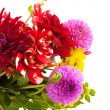 Bouquet Dahlias — Stock Photo #3725034