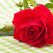 Fresh red rose — Stock Photo