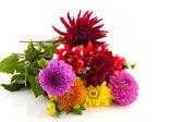 Bouquet Dahlias — Stock Photo
