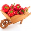 Wooden wheelbarrow full with red paprika — Stock Photo