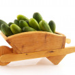 Many cucumbers in wheelbarrow — Stock Photo