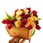 Wooden wheelbarrow with tulips — Stock Photo