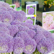 Allium at the market — Stock Photo