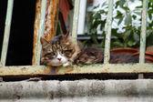 Cat on balcony — Stok fotoğraf