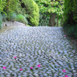 Boulder path with petals — Photo