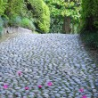 Boulder path with petals — Stock Photo