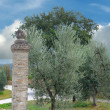 Antique pillar and olive tree - Stock Photo