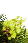 Zielona orchidea — Zdjęcie stockowe