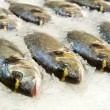 Fresh fish — Stock Photo #2835762