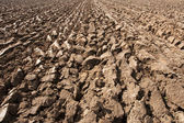 Ploughed field — Photo