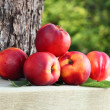 Stock Photo: Ripe nectarines